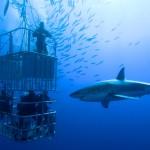 Höllenritt: Mit dem Weißen Hai tauchen