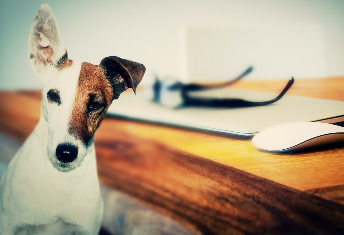 Mit dem Hund ins Büro