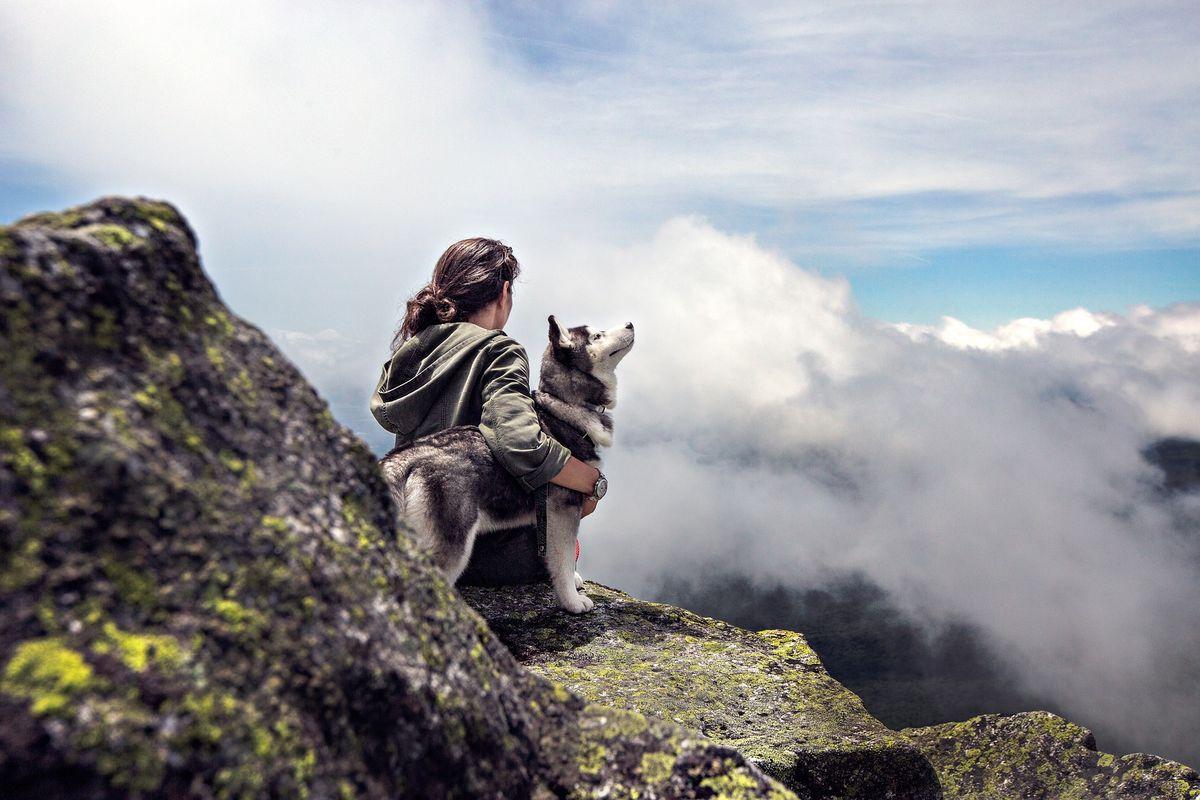 Wuff-Hotels: Wellness für Hunde