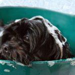 Wuffi-Hotels: Wellness für Hunde