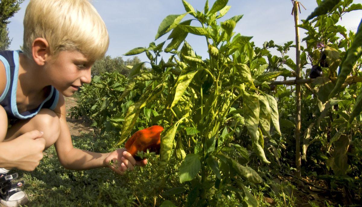 Sardinien: Leichte Ernährung