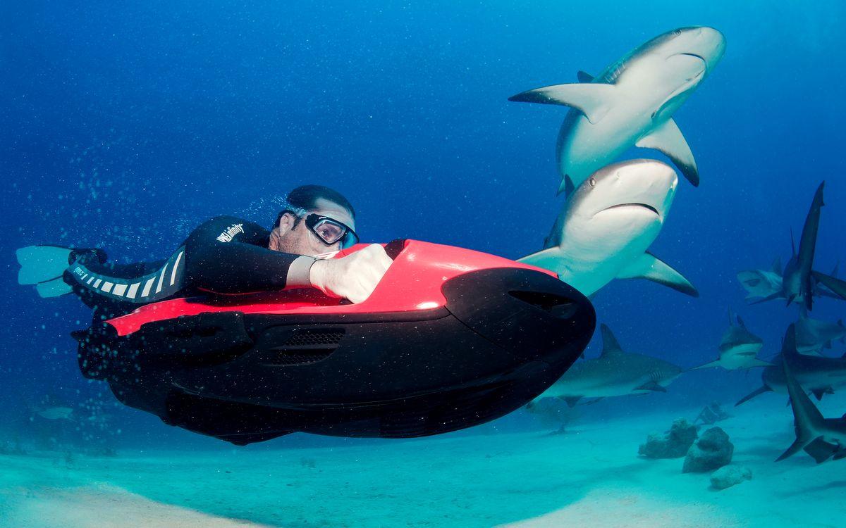Meeting mit den Haien