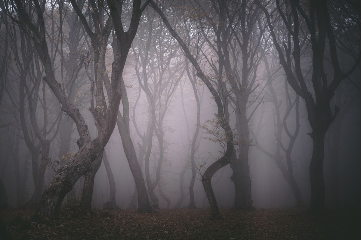 Hoia-Baciu-Wald, Rumänien