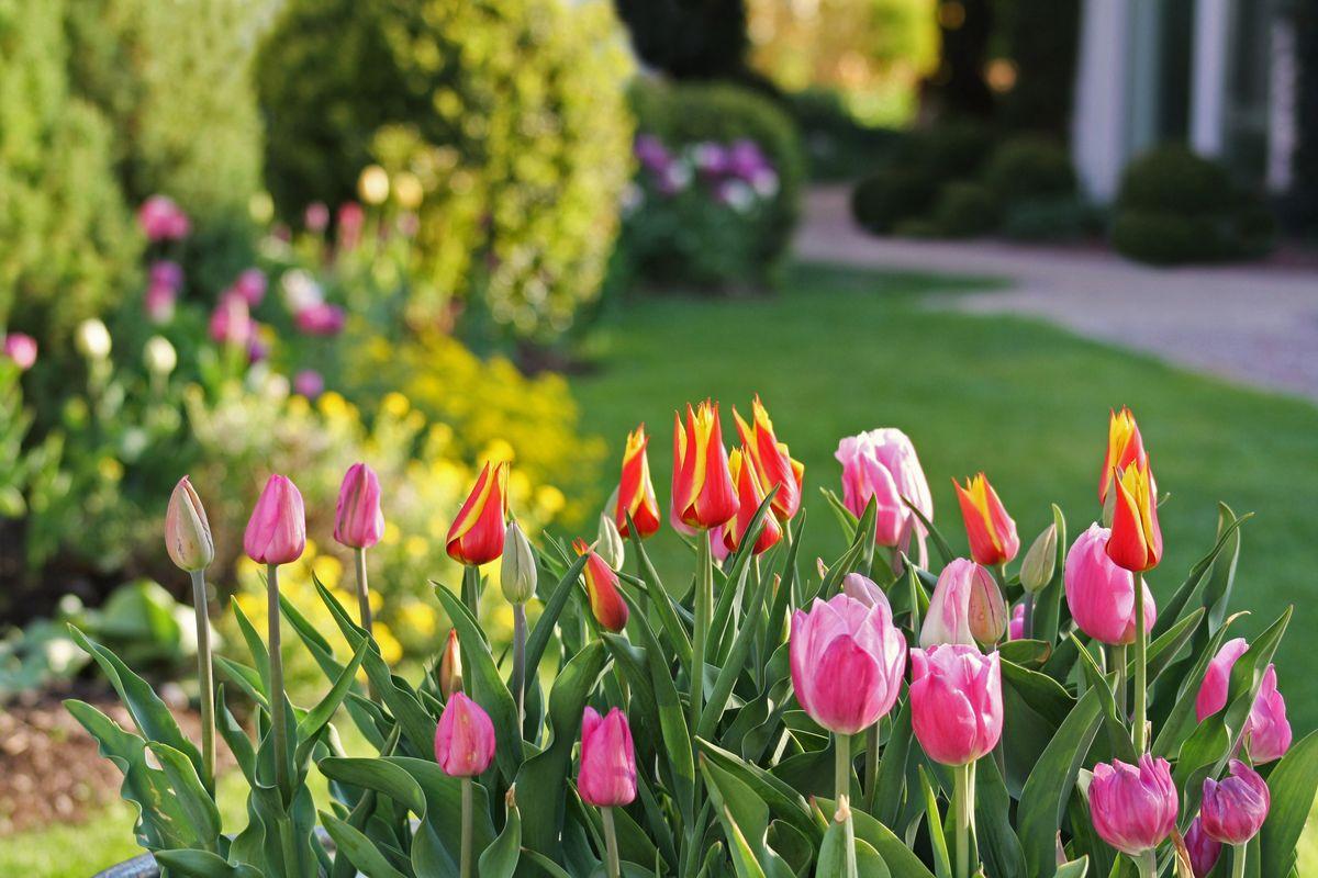 April: Frühlingszauber mit 20.000 Blüten auf dem Mieminger Sonnenplateau