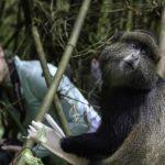 Travel with Purpose: Menschenaffen und Regenwälder entdecken