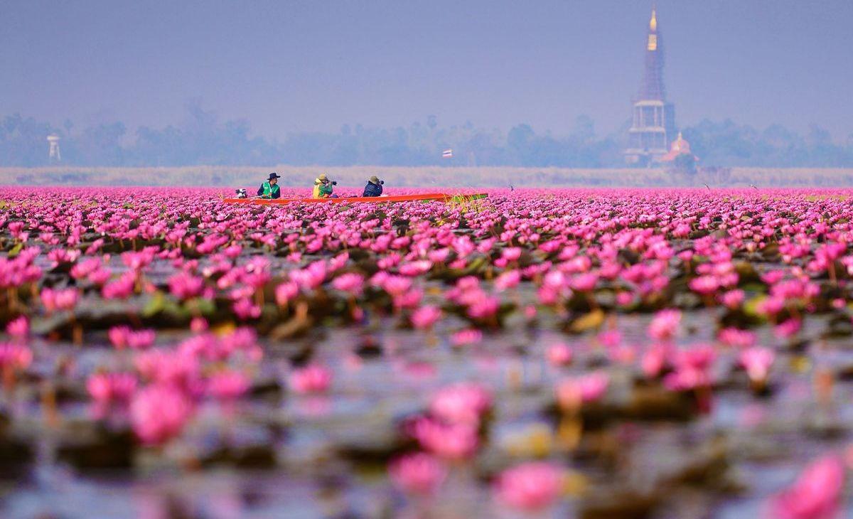 Lotussee im Norden von Thailand