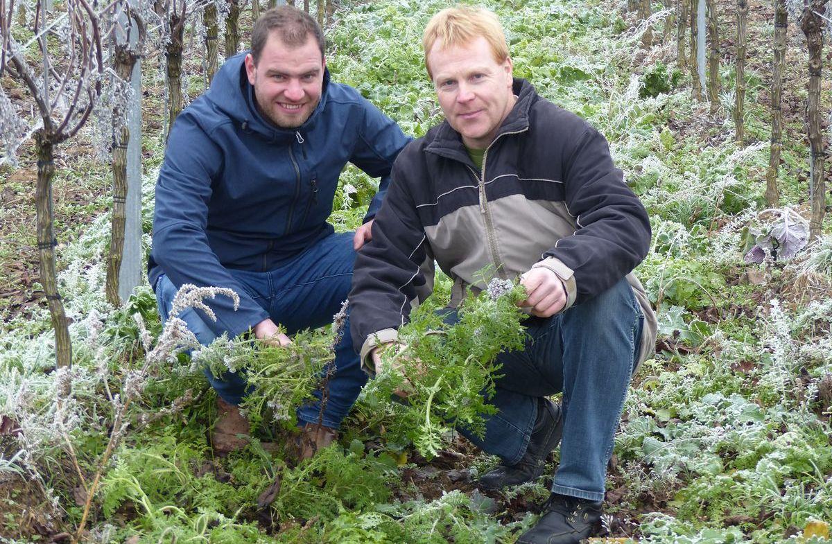David Klenert (links) zeigt Landwirt Martin Ebert erste Ergebnisse seines regenerativen Weinbaus.