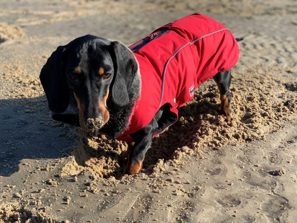 Hunde-Fashion von Wolters