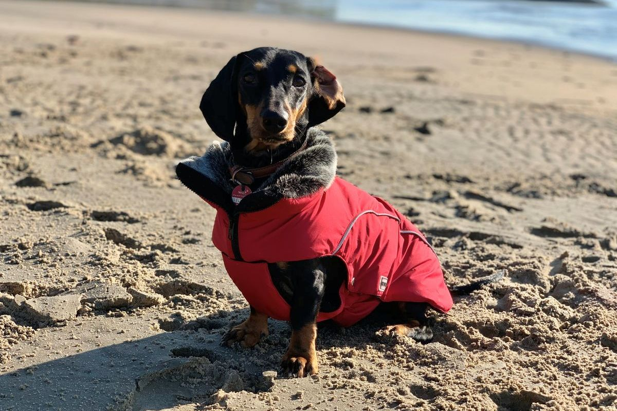 """#ShotsDog Bessy in der Winterjacke Amundsen von """"Wolters cat & dog"""""""