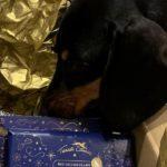 Terra Canis: #ShotsDog Bessy testet das Weihnachtsmenü für Hunde