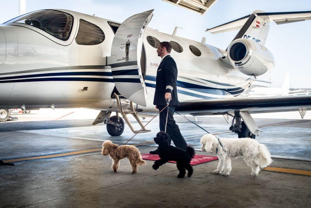 GlobeAir: Hunde können unkompliziert im Business Jet mitreisen.