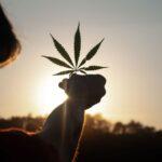 JustMary.fun: Experten für legalen Cannabis