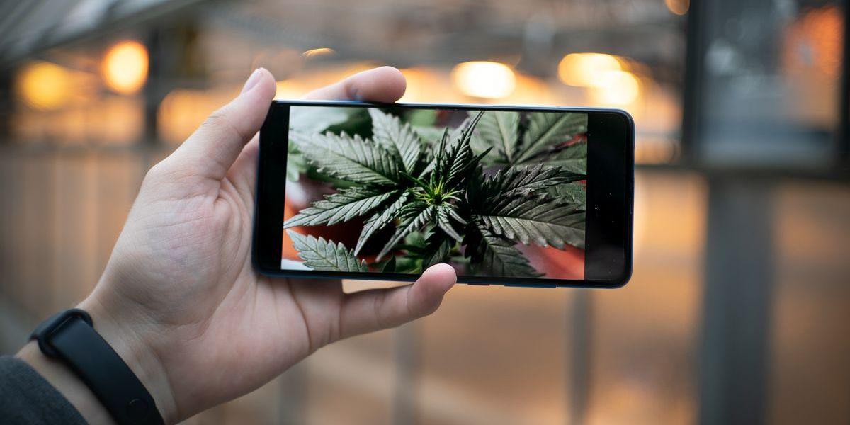 Man kann Cannabis produzieren und vermarkten, solange sein THC-Gehalt 0,2 Prozent nicht übersteigt.