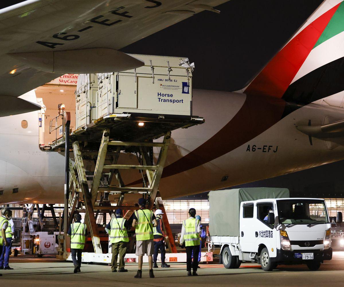 Emirates: 247 Sportpferde fliegen um die Welt